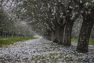Scenic view of trees at park during snowfall - CAVF58309