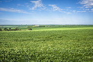 Scenic view of agricultural field against sky - CAVF58312