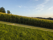 Germany, Bavaria, Passau region, cornfield - JUNF01531