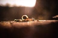 Close-up of snail - INGF08892