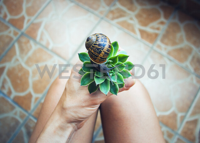 Midsection of woman holding succulent plant with snail while sitting at home - CAVF58420