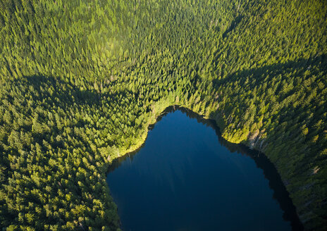 Aerial view of river amidst trees in forest - CAVF58447