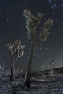 Low angle majestic view of Joshua Trees against star trails at national park - CAVF58633
