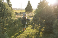 Full length of girl choosing Christmas Tree at farm during sunny day - CAVF58912