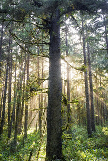 Trees and plants growing in Redwood National and State Parks - CAVF58984