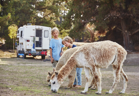 Chile, Vina del Mar, two boys stroking llamas in front of a camper in the forest - SSCF00093