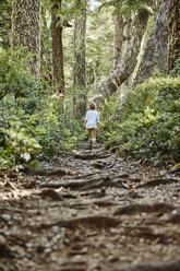 Chile, Puren, Nahuelbuta National Park, boy walking on path through forest - SSCF00147