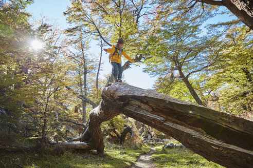 Argentina, Patagonia, El Chalten, boy balancing on a tree trunk in forest - SSCF00324