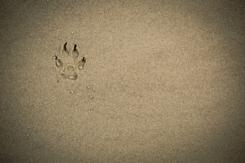 Paw print in wet sand - REAF00497