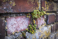 Germany, Bavaria, Nuremberg, Detail of brick wall with plants - MHF00489