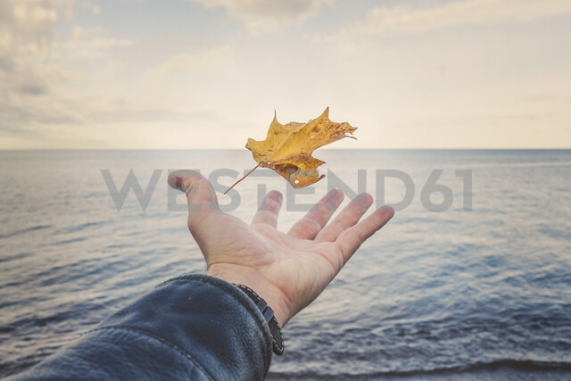 Cropped hand of man catching autumn leaf by Lake Superior against sky during sunset - CAVF59338