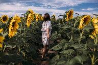 Rear view of girl walking in sunflower farm - CAVF59491