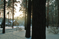 Scenic view of a snow covered forest during the winter - INGF09105