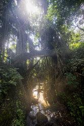 Indonesia, Bali, Ubud, Sacred Monkey Forest Sanctuary, carved bridge with overgrowing trees - RUN00394