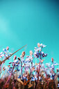 Low angle view of fragile flowers under a blue sky - INGF10289