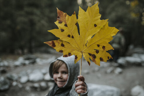 Portrait of boy showing maple leaf at Yosemite National Park during autumn - CAVF60128