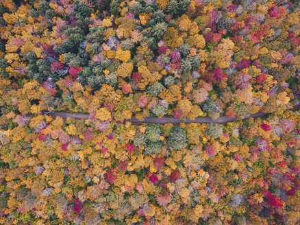 High angle idyllic view of trees in forest during autumn - CAVF60167