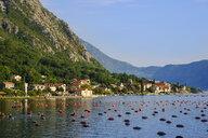 Montenegro, Bay of Kotor, Ljuta - SIEF08188