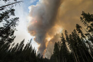 Low angle view of smoke emitting during forest fire at Grand Teton National Park - CAVF60355
