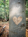 Heart carved into a tree trunk in the woods - IPF00490