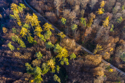 Germany, Baden-Wuerttemberg, Swabian forest, Nassach Valley, Aerial view of forest in autumn - STSF01814