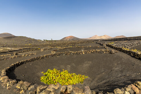 Spain, Canary Islands, Lanzarote, La Geria, viticulture at Volcanic landscape - MABF00511