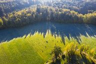 Germany, Upper Bavaria, Aerial view of cows on pasture at autumn morning - SIEF08236