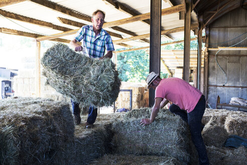 Two farmers stacking hay bales in a barn. - MINF09731