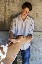 Young man standing in a barn, stroking Guernsey calf. - MINF09755