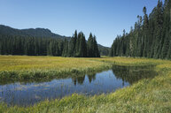 Bumping River flowing through alpine meadow and forest along the Pacific Crest Trail in the Cascades range on the Pacific Crest Trail. - MINF09806