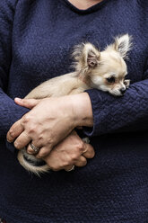 Woman holding a small dog in her arms. - MINF09818