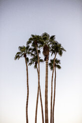USA, California, Palm Springs, group of palm trees under blue sky - DAWF00866