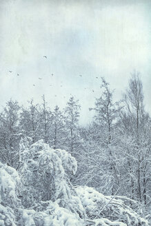 Forest in winter near Wuppertal, flying birds - DWIF00969