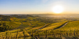 Germany, Baden-Wuerttemberg, Stuttgart Untertuerkheim, vineyards in autumn at sunset - WDF04959