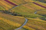 Germany, Baden-Wuerttemberg, Stuttgart Rotenberg, vineyards in autumn in the evening - WDF04962
