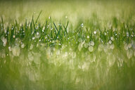 Full frame shot of wet grass in a field - INGF10534