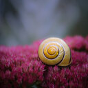 Close-up shot of a fragile snail on a flower - INGF10842