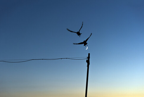 Silhouette of two flying birds against blue sky with half moon - SKAF00093