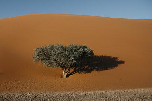 Namibia, Namib desert, Namib-Naukluft National Park, Sossusvlei, Dune 45 - LHPF00245