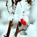 Close-up shot of snow on a tree in winter - INGF11322