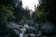 Scenic view of rocks in the forest - INGF11418