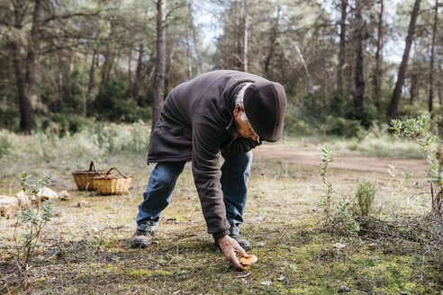 Senior man finding mushroom in the forest - JRFF02246