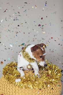 Dog wearing golden garland and Christmas bauble - JPF00331