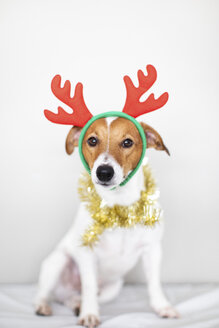 Portrait of dog wearing reindeer antlers headband and golden garland - JPF00334