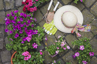 Various potted spring and summer flowers, straw hat, gardening tools and gloves on cabblestone pavement - GWF05736