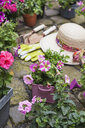 Various potted spring and summer flowers, straw hat, gardening tools and gloves on cabblestone pavement - GWF05739