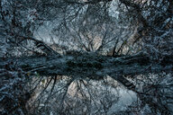 Winterwelt - INGF11533
