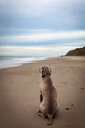 Rear view of dog sitting at looking at the sea - INGF11569