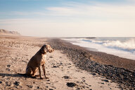 A dog on the beach during sunset - INGF11662