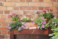 Various potted spring and summer flowers, gardening tools and gloves - GWF05758